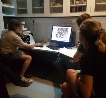 Looking at micromorphological thin sections